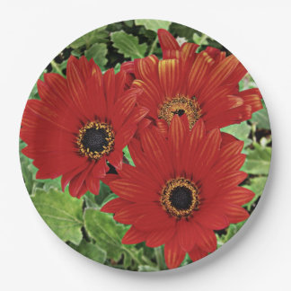 Three as they bloom in red paper plate