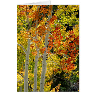 Three Aspens in Autumn, Blank Greeting Card