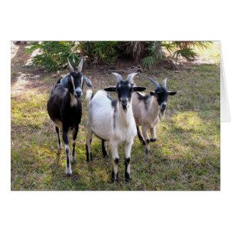 Three Billy Goats Card
