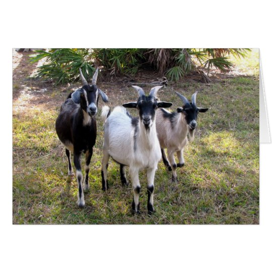 Three Billy Goats Card