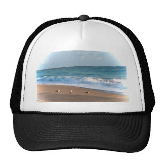 three birds on shore photo florida beach hat
