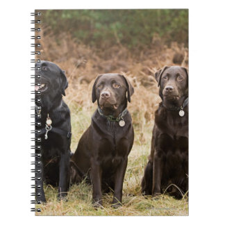 Three Black Labrador retrievers Notebooks