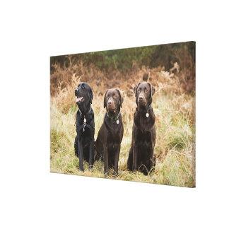 Three Black Labrador retrievers Stretched Canvas Print