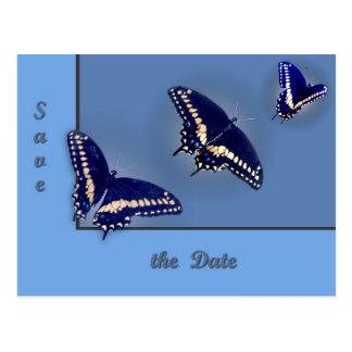 Three Black Swallowtail Postcard