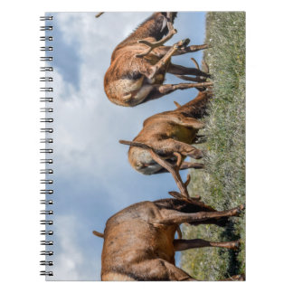 Three Bulls Notebook