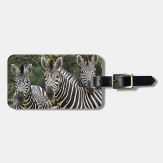 Three Burchell's Zebra (Equus Burchellii) Stand Luggage Tag