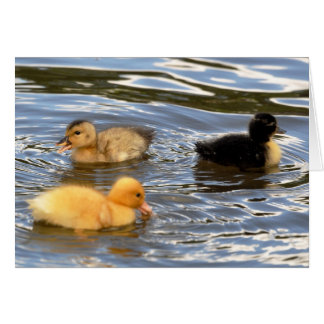 Three coloured ducklings card