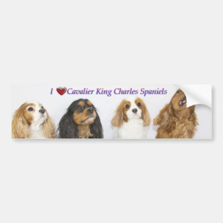 Three Colours of Cavalier King Charles Spaniels Bumper Sticker