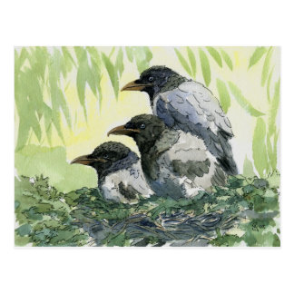 Three crow by schukina postcard