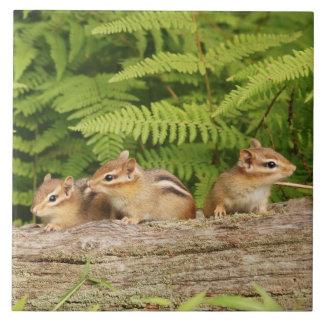 Three Cute Baby Chipmunks Large Square Tile