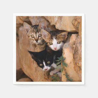 Three Cute Curious Cat Kittens Faces Funny Photo / Disposable Napkin