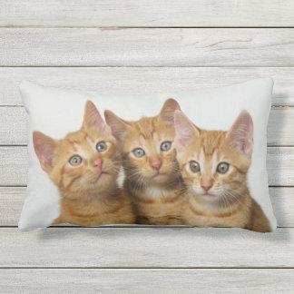 Three Cute Ginger Cat Kittens Friends Head Photo - Outdoor Cushion