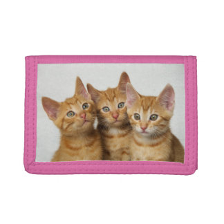 Three Cute Ginger Cat Kittens Friends Head Photo - Tri-fold Wallets