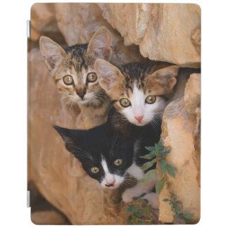Three cute prying kittens iPad cover