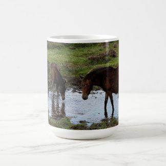 Three Dartmoor Ponies Drinking At Watering Hole Basic White Mug