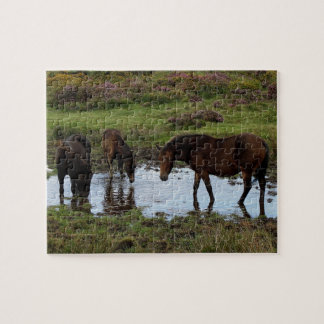 Three Dartmoor Ponies Drinking At Watering Hole Puzzle