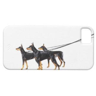 Three Dobermans on leash iPhone 5 Case