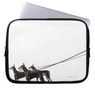 Three Dobermans on leash Laptop Sleeve
