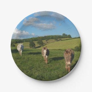 Three Donkeys in a Field Paper Plate