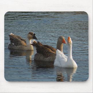 Three Ducks Mouse Pad