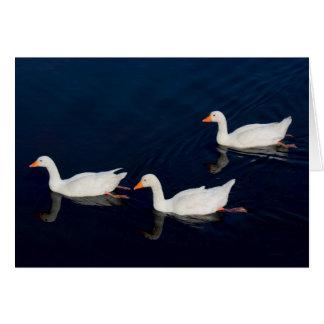 Three Emden Geese Card