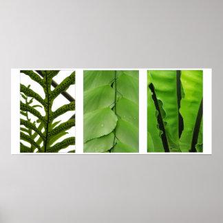 Three Ferns Poster