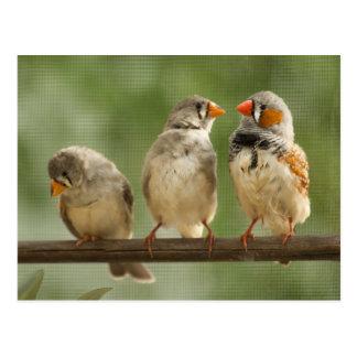 Three Finches on a Twig Postcard