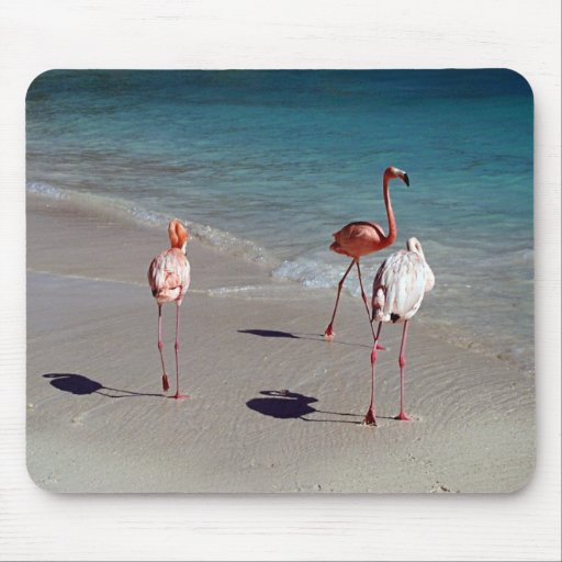Three Flamingos from Aruba Mouse Pads