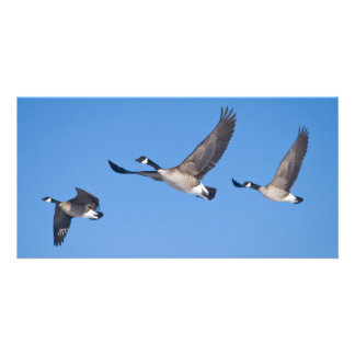 three fly photo greeting card