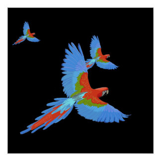 Three Flying Macaws Hand Drawn Poster