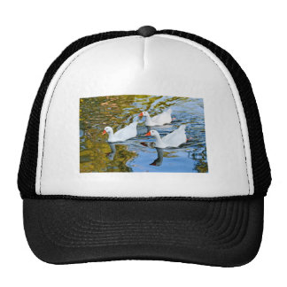 three geese swimming hat