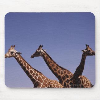 Three giraffes mouse pad