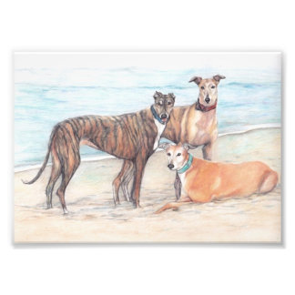 Three Greyhound Dog Art Phoo Print