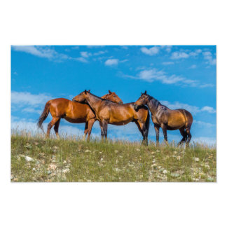 Three horses groom each other on a meadow photo print