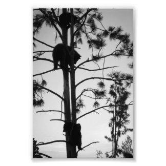 Three in Tree Photographic Print