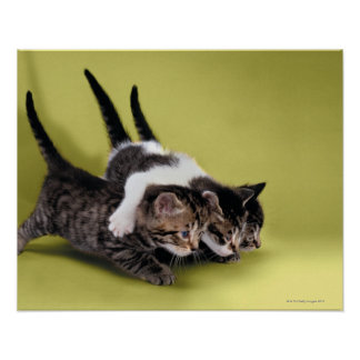 Three kittens hugging each other poster