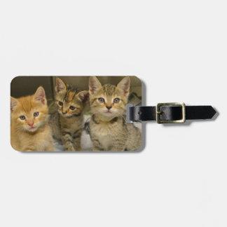 Three Kittens Luggage Tag