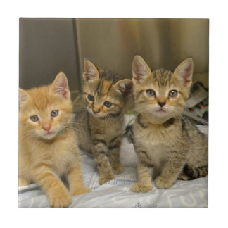Three Kittens Small Square Tile