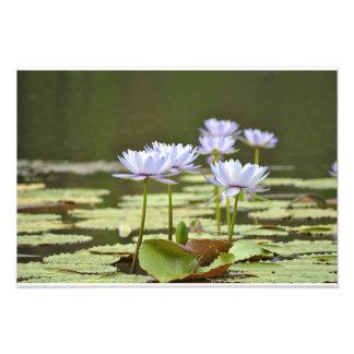 Three Lillies Art Photo