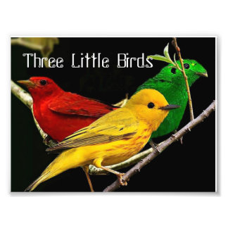 three little birds photo print
