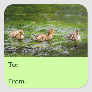 Three Little Ducklings Ducks Square Sticker
