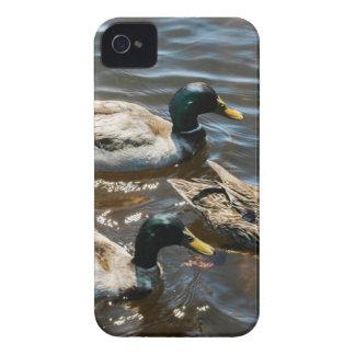 Three Little Ducks iPhone 4 Case-Mate Cases