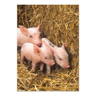 Three Little Pigs 13 Cm X 18 Cm Invitation Card