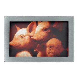 Three Little Pigs Belt Buckle