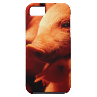 Three Little Pigs Case For The iPhone 5