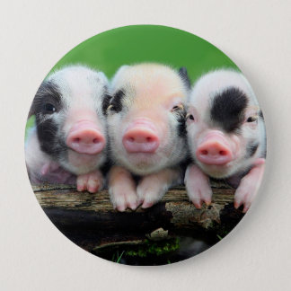 Three little pigs - cute pig - three pigs 10 cm round badge
