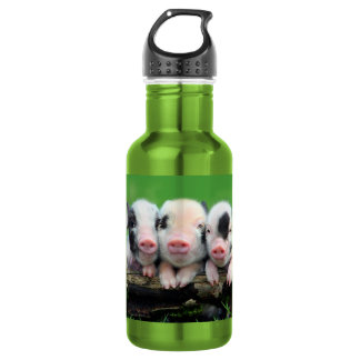 Three little pigs - cute pig - three pigs 532 ml water bottle