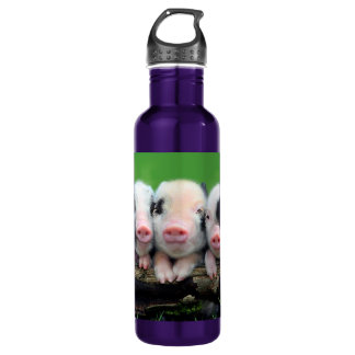 Three little pigs - cute pig - three pigs 710 ml water bottle