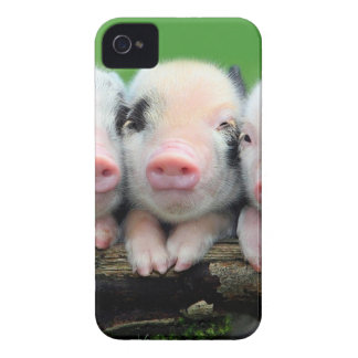Three little pigs - cute pig - three pigs iPhone 4 cover