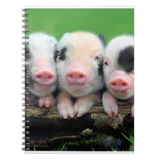 Three little pigs - cute pig - three pigs notebooks